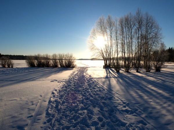 sweden-umea-nature-nydala
