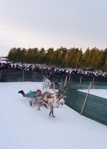 sweden-jokkmokk-reindeer-race