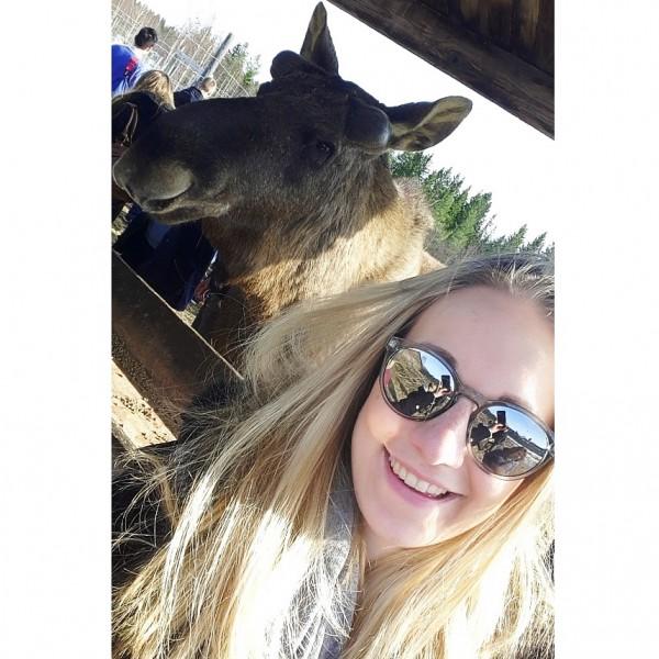 sweden-elk-farm