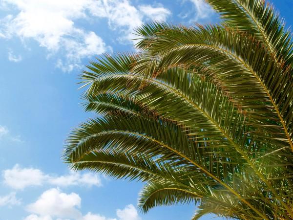 crete-greece-adelianos-kampos-palmtree